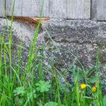 Podmurówka synagogi